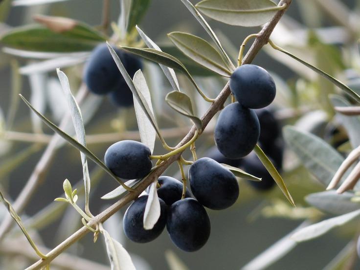 olives-357849_1280