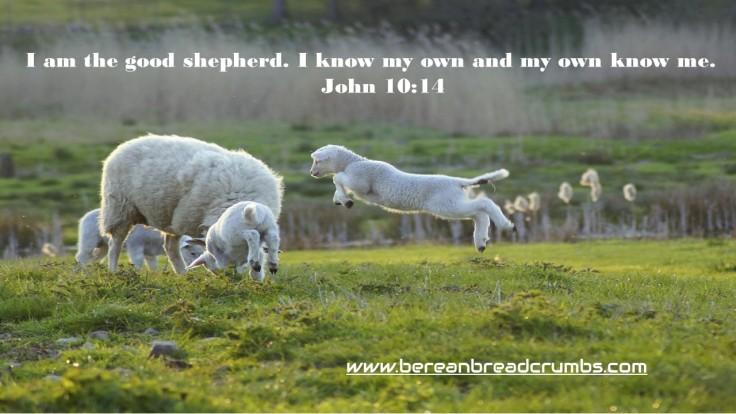 John 10 sheep